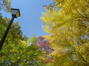 lamp with fall leaves
