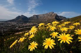 daisy mountains