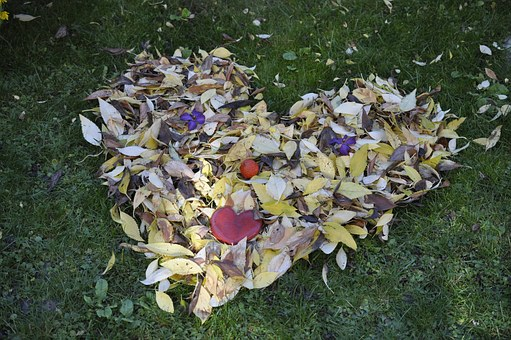 leaves-1025495__340